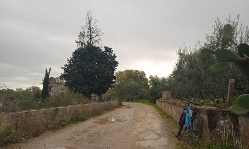 San Ferdinando, Trinitapoli e il Derivativo Ofantino